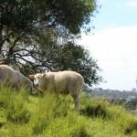 Sicht nach Auckland City