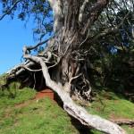 Die erste natürliche Hobbithöhle