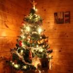 Weihnachtsbaum meiner Gastfamilie