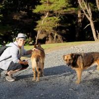 Sandra und die Hostelhunde