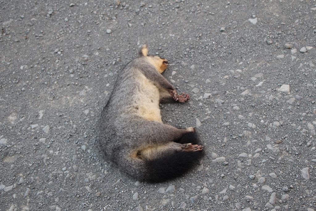 Possum... tot!