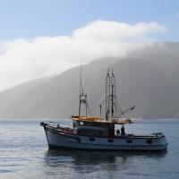 Fischerboot und Albatross