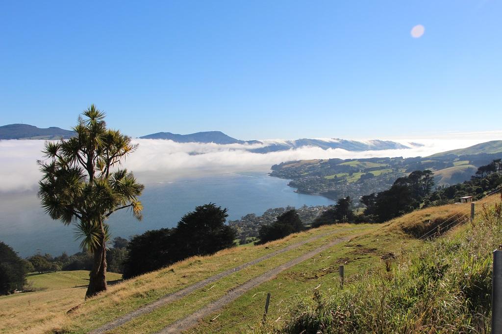 Blick auf den Otago Habour